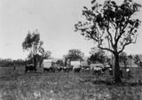 Picture relating to Warwick - titled 'Cattle grazing at Wilson's Farm, near Warwick, Queensland, ca. 1897'