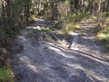 Walking Track damage from miss-use of 4-Wheel  Drives in Park