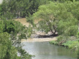 Picture relating to Macleay River - titled 'Macleay River/5 Day Creek'