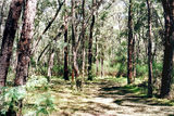 Picture of / about 'Blue Hole' Victoria - Blue Hole bush camp