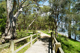 Picture relating to Lake Macquarie - titled 'Murrays Beach Footbridge, Lake Macquarie'