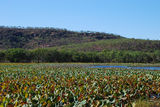 Picture of / about 'Mount Nancar' the Northern Territory - Mount Nancar