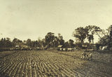 Picture of / about 'Ingham' Queensland - Ingham Plantation