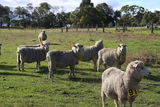 Picture of / about 'Struan' South Australia - Struan