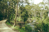 Picture relating to Toombullup - titled 'Toombullup State Forest: Jones Camp Ground'