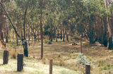 Picture relating to Glenpatrick Creek - titled 'Glenpatrick Creek Picnic Ground, Pyrenees State Forest'