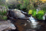 Picture relating to Guy Fawkes River National Park - titled 'Guy Fawkes River National Park'