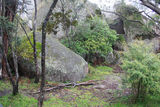 Picture of / about 'Bald Rock' New South Wales - Track side view near summit