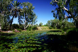 Picture of / about 'Millstream-Chichester National Park' Western Australia - Millstream-Chichester National Park