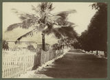 Picture relating to Palm Island - titled 'Residential quarters on Palm Island, 1932'