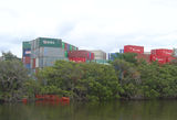 Picture relating to Parramatta River - titled 'Containers and mangroves at Camellia on Parramatta River'