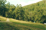 Picture of / about 'Toorongo River' Victoria - Toorongo River: Toorongo Falls Camp Ground, Noojee State Forest