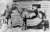 Picture of / about 'St Lawrence' Queensland - Harry L. Black