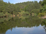Picture of / about 'Nowendoc River' New South Wales - Nowendoc River