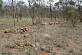Picture relating to Mount Cottrell - titled 'Mulla Mulla Grassland at Mount Cottrell'