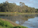 Picture relating to Hillston - titled 'Swans on the lake at Hillston NSW'