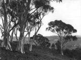 Picture relating to Parliament House - titled 'Old Parliament House from Mt Ainslie framed in trees'