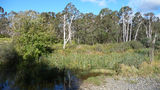 Picture of / about 'Paddys River' New South Wales - Paddys River