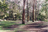 Picture relating to Murrindindi River Scenic Reserve - titled 'Murrindindi River Scenic Reserve; Blackwood Camp Ground'