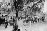 Picture relating to Undulla Creek - titled 'Picnic day races at Undulla Creek, Queensland, ca. 1920'