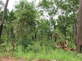 Picture of / about 'Ramingining' the Northern Territory - Ramingining