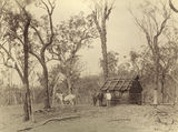 Picture of / about 'Laidley' Queensland - Settlers bark hut on Laidley Creek