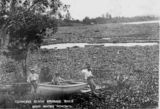 Picture relating to Brisbane River - titled 'Among the water hyacinths at Toowong Reach on the Brisbane River, ca. 1910'