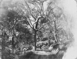 Picture relating to Currumbin - titled 'Walking down the track from the hotel to the beach at Currumbin, ca. 1915'