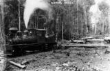 Picture of / about 'Beechmont Range' Queensland - Canungra Pine Creek Tramway in dense timber region, ca. 1914
