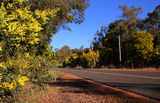 Picture relating to Dwellingup - titled 'Golden road into Dwellingup WA'