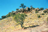 Picture of / about 'Riversleigh Fossil Mammal Site' Queensland - Riversleigh Fossil Mammal Site