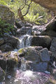 Picture of / about 'Dubbo Falls' New South Wales - Dubbo Falls