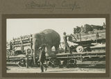 Picture relating to Lismore - titled 'Wirth's circus elephant getting off a rail carriage, Lismore, ca. 1925'