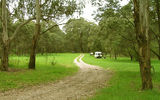 Picture of / about 'Buckland River' Victoria - Buckland River State Forest Camp Ground