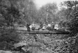 Picture relating to Spring Bluff - titled 'People sitting on a large log across a gully in the rainforest at Spring Bluff, Queensland, 1900'
