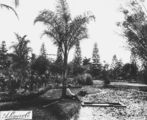 Picture relating to Bowen Hills - titled 'Man sitting at the edge of a creek which ran through Bowen Park at Bowen Hills, Brisbane, ca. 1889'