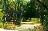 Picture relating to Gippsland Lakes Coastal Park - titled 'Gippsland Lakes Coastal Park camp grounds'