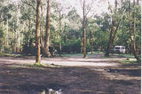 Picture relating to Murrindindi River Scenic Reserve - titled 'Murrindindi River Scenic Reserve; Pine Tree Camp Grounds'