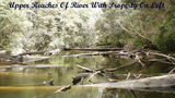 Picture relating to Dover - titled 'Lune River In The Far South Of Tasmania'