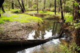 Picture relating to Chichester Range - titled 'Piesse Brook via Kalamunda'