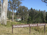 Picture relating to Gallangowan - titled 'Gallangowan'