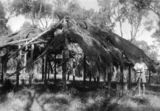 Picture relating to Flinders River - titled 'Early construction of a settler's cottage at Flinders River in central Queensland, ca. 1945'