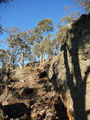 Picture of / about 'Black Mountain Reserve' the Australian Capital Territory - Rocky outcrops