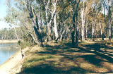 Picture relating to Cobram - titled 'Cobram Regional Park: Horseshoe Bend'