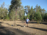 Picture of / about 'Western Creek State Forest' Queensland - Western Creek State Forest