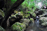 Picture of / about 'Nightcap National Park' New South Wales - Nightcap National Park
