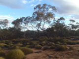 Picture relating to Mungo - titled 'The Mallee Stop'