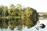 Picture relating to Rathmines - titled 'Pelican Reflections. Rathmines Park. Landscape photo art.'