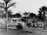 Picture relating to Brisbane - titled 'Tall palms growing in Albert Park, Brisbane, 1929'