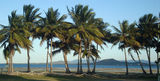 Picture relating to Bowen - titled 'Coconut trees McCanes Bay Bowen'